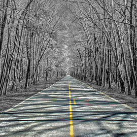Steven  Taylor - The Road