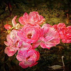 Lianne Schneider - The Romance of Roses