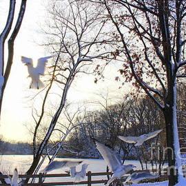 Dora Sofia Caputo Photographic Art and Design - The  Birds of Winter