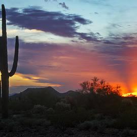 Saija  Lehtonen - The Sonoran Desert Aglow