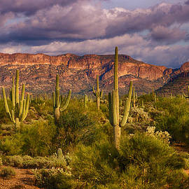 Saija  Lehtonen - The Sonoran Golden Hour