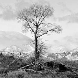 Lisa Holland-Gillem - The Stark Tree in Black and White