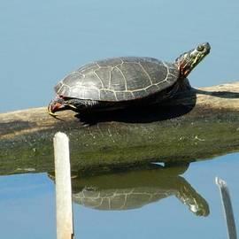 The Tao Turtle by Nancy Spirakus