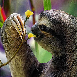 Gary Keesler - The Three-Toed Sloth