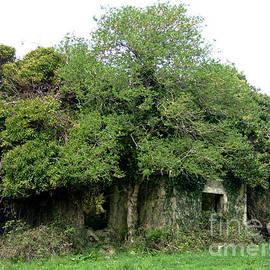 The Tree house by Joe Cashin