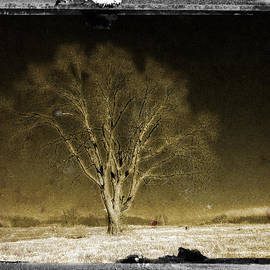 Timothy Bischoff - The Tree