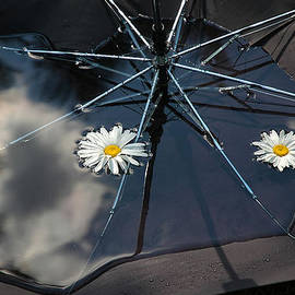 Rein Nomm - The Umbrella Bowl