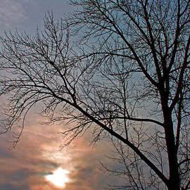 Rhonda Humphreys - The Winter Skies