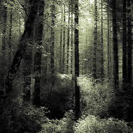 Katie Wing Vigil - The Woods