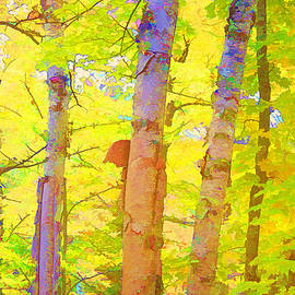 Three Birches in Wow Color by Susan Crossman Buscho