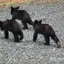 Jan Dappen - Three Little Bears in Step