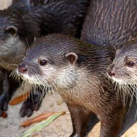 Three Otters by Daniel Eskridge