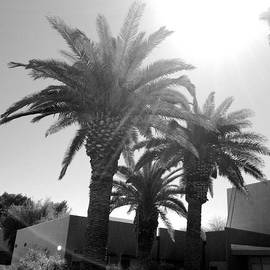 Randal Higby - Three Palms