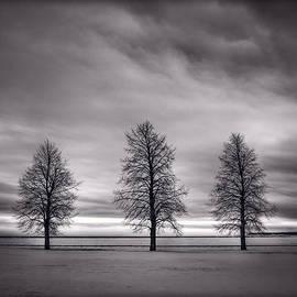 Steve Gadomski - Three Trees
