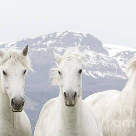 Carol Walker - Three White Horses Run in the Mountains