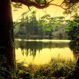 Joyce Dickens - Through The Forest To The Lake Two