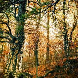 Douglas MooreZart - Through the Island Forest