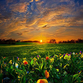 Phil Koch - Through the Veil