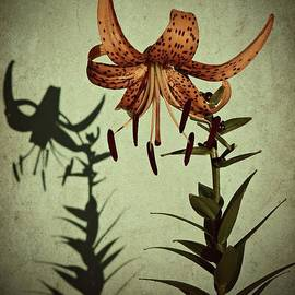 Tiger Lily by Chris Berry
