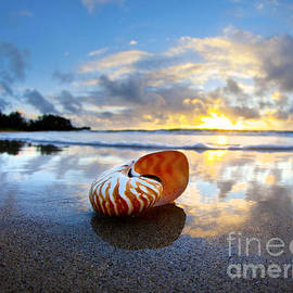 Tiger Nautilus Sunrise by Sean Davey