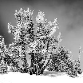 Trees on top of Mountain by Maria Coulson
