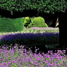 Topiary in an English Garden by Nigel Radcliffe