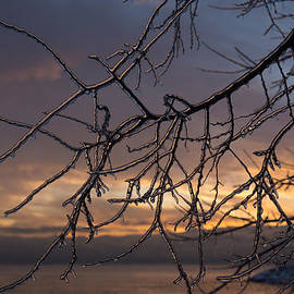 Georgia Mizuleva - Toronto Ice Storm 2013 - a Sunrise Through the Icy Branches