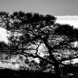 Lee Kirchhevel - Torrey Pine Black and White