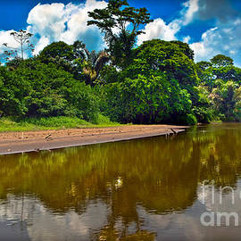 Tortuguero River Canals by Gary Keesler