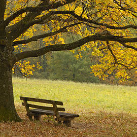 Tree And Bench In Fall by Matthias Hauser