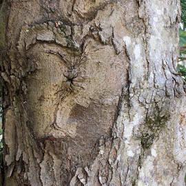 Christy Cox - Tree Art - Heart