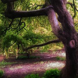 Deena Athans - Tree at Prescott Park