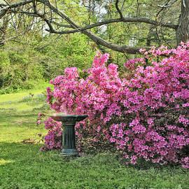 Tree Azalea And Birdbath Scenic by Pamela Smale Williams