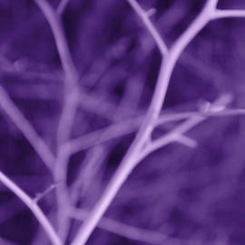Jennie Marie Schell - Tree Branches Abstract Purple