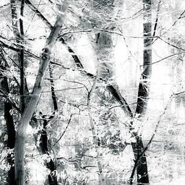 Dorit Fuhg - tree breeze
