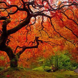 Darren  White - Tree Fire