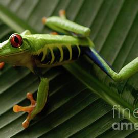 Bob Christopher - Tree Frog 16