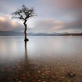 Grant Glendinning - Tree