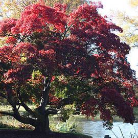 Tree Hanging into Lake by John Telfer