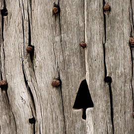 Tree in Wood by Anne Gilbert