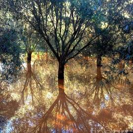 Tree Reflection by Noa Yerushalmi
