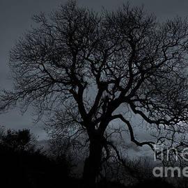 Ian Mitchell - Tree Silhouette