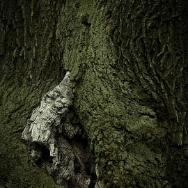 Ulrich Kunst And Bettina Scheidulin - Tree spirit - available for licensing
