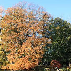 Trees and Lake at Westbury Gardens by John Telfer