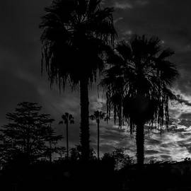 Trees By Moonlight by Photographic Art by Russel Ray Photos