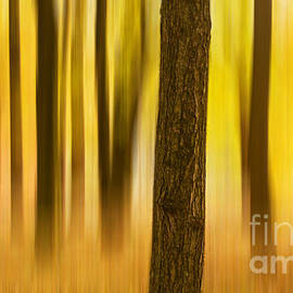 Trees in Autumn forest by Rima Biswas