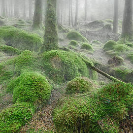 Rod McLean - Trees in mist
