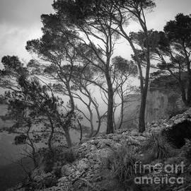 Alexander Kunz - Trees in Rain