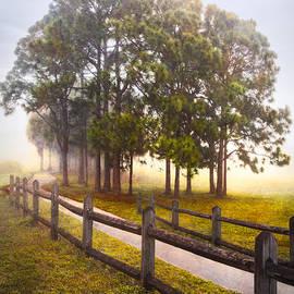 Debra and Dave Vanderlaan - Trees in the Mist
