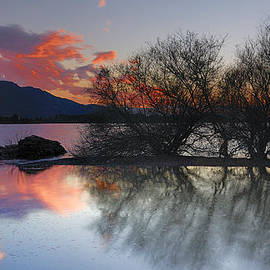 Trees in the water at the red sunset by Guido Montanes Castillo